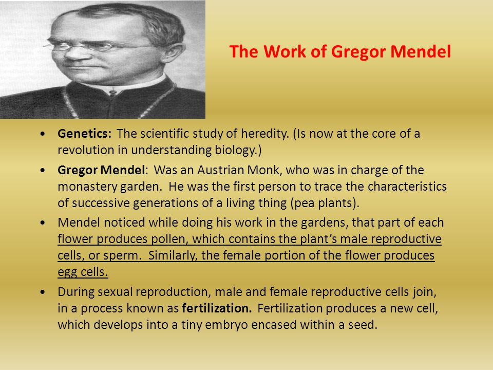The Work of Gregor Mendel Genetics: The scientific study of heredity. (Is now at the core of a revolution in understanding biology.) Gregor Mendel: Wa
