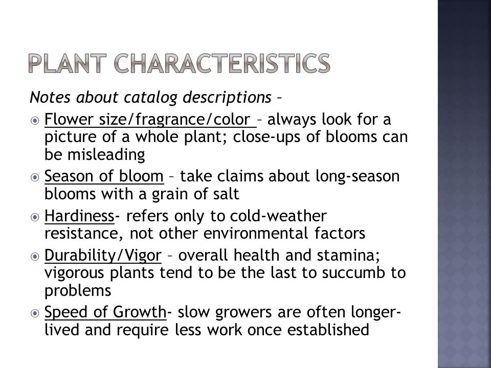 Notes about catalog descriptions – Flower size/fragrance/color – always look for a picture of a whole plant; close-ups of blooms can be misleading Season of bloom – take claims about long-season blooms with a grain of salt Hardiness- refers only to cold-weather resistance, not other environmental factors Durability/Vigor – overall health and stamina; vigorous plants tend to be the last to succumb to problems Speed of Growth- slow growers are often longer- lived and require less work once established