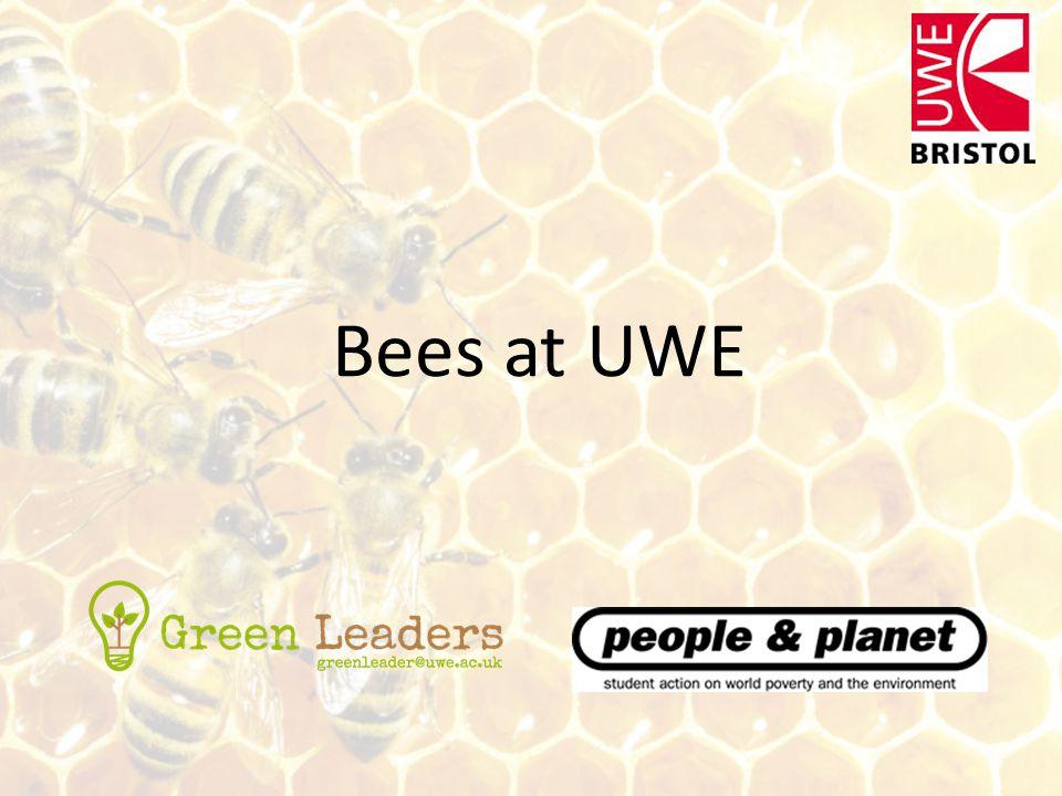 Bees at UWE