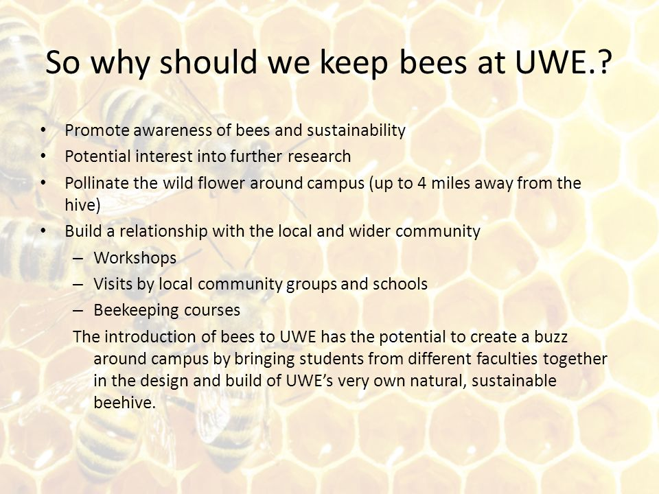 So why should we keep bees at UWE.? Promote awareness of bees and sustainability Potential interest into further research Pollinate the wild flower ar
