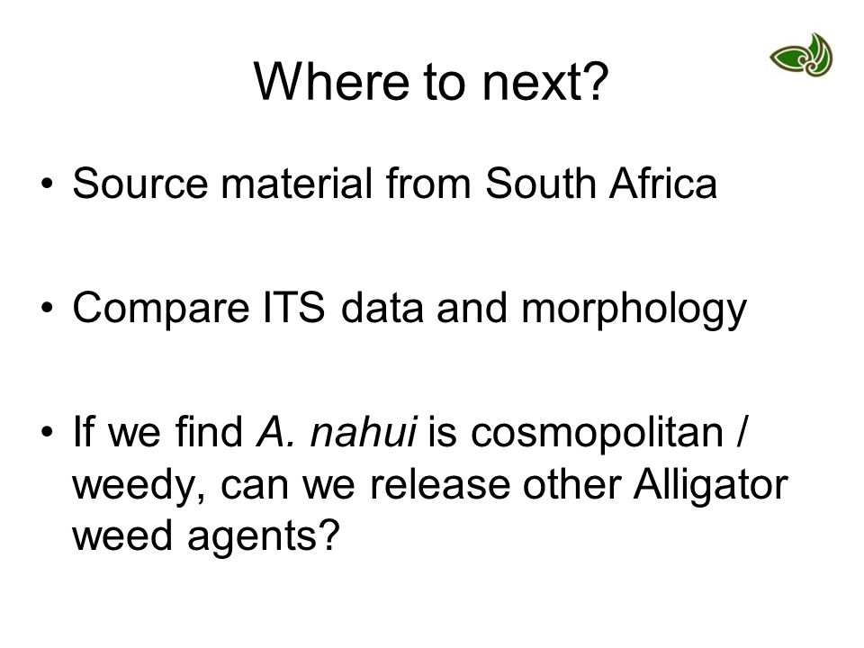Where to next. Source material from South Africa Compare ITS data and morphology If we find A.