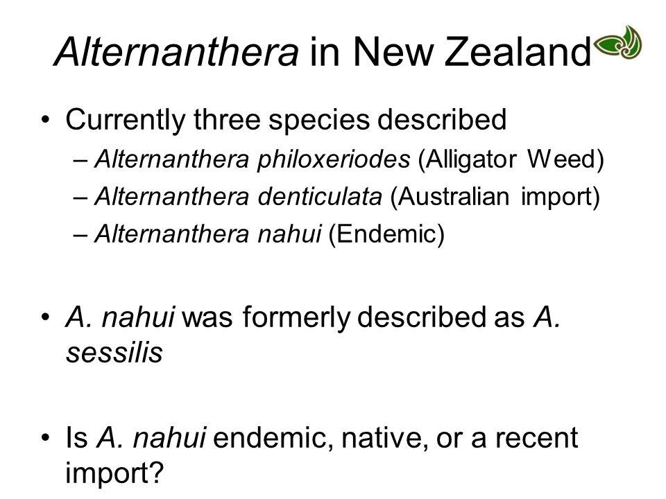 Alternanthera in New Zealand Currently three species described –Alternanthera philoxeriodes (Alligator Weed) –Alternanthera denticulata (Australian im