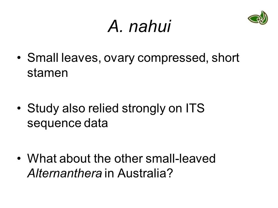 A. nahui Small leaves, ovary compressed, short stamen Study also relied strongly on ITS sequence data What about the other small-leaved Alternanthera