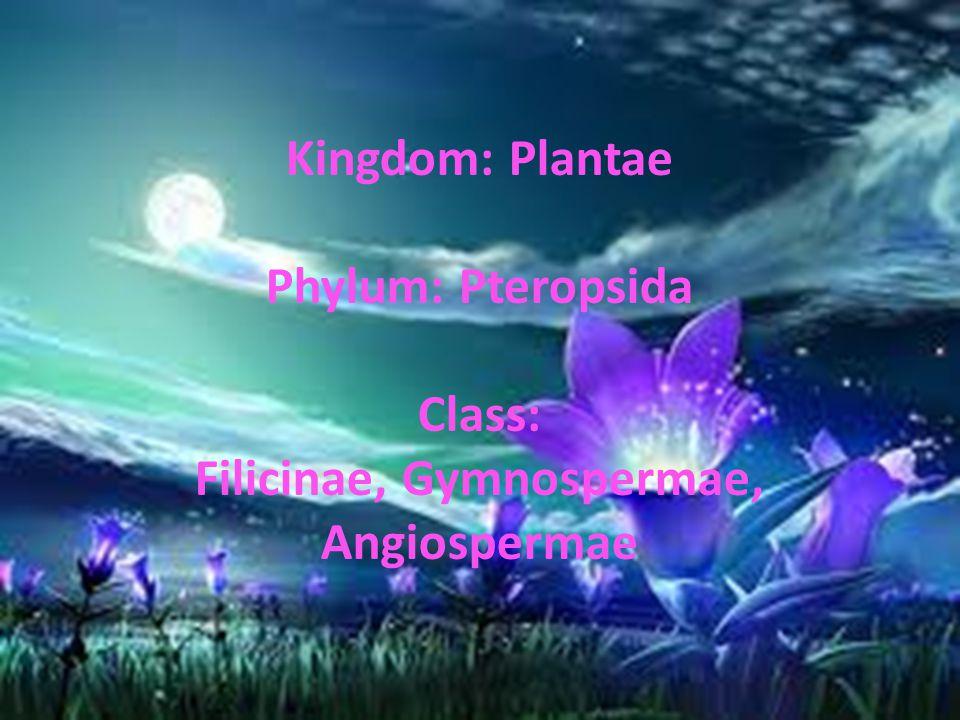 Kingdom: Plantae Phylum: Pteropsida Class: Filicinae, Gymnospermae, Angiospermae