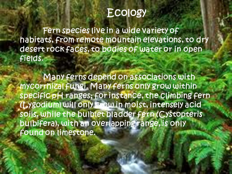 Ecology Fern species live in a wide variety of habitats, from remote mountain elevations, to dry desert rock faces, to bodies of water or in open fields.