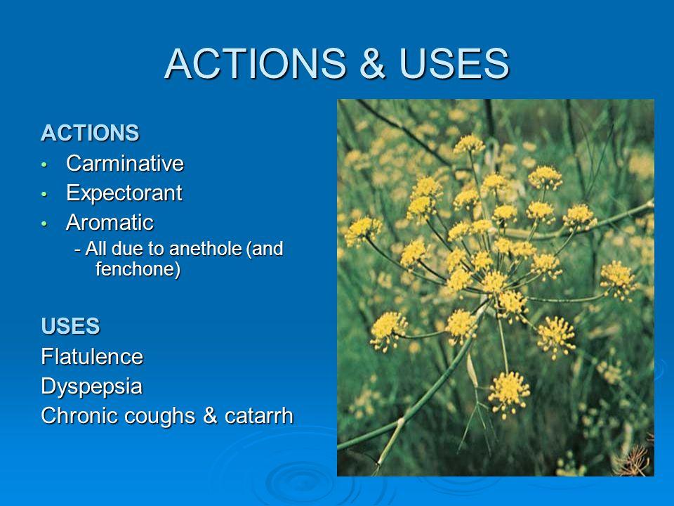 ACTIONS & USES ACTIONS Carminative Carminative Expectorant Expectorant Aromatic Aromatic - All due to anethole (and fenchone) USESFlatulenceDyspepsia