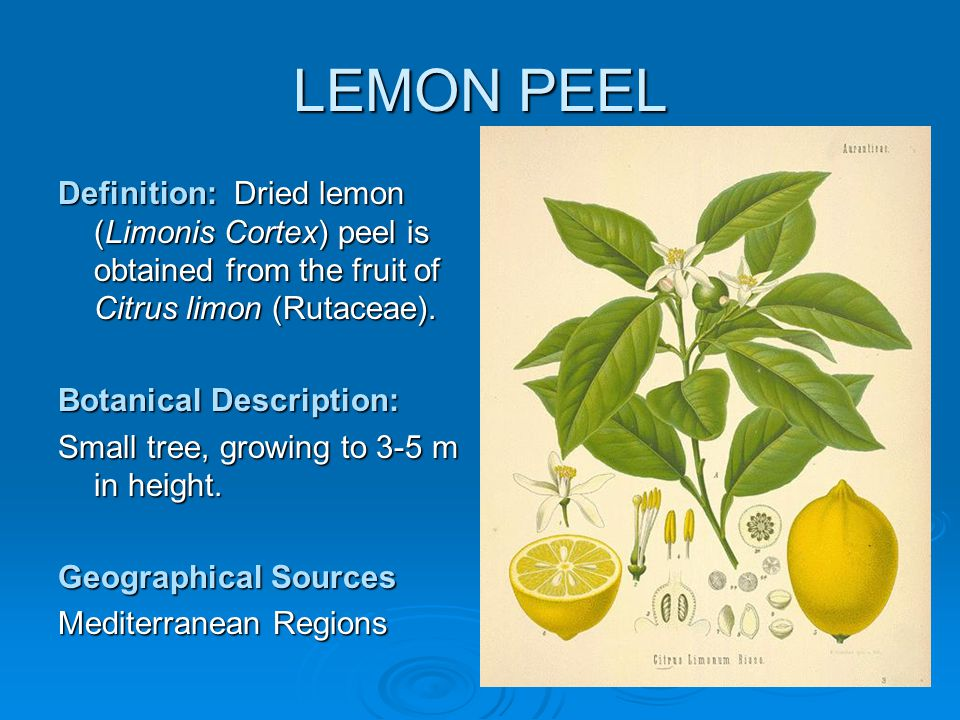Limonis Cortex – COLLECTION & PREPARATION Lemons are collected in January, August & November, before the green colour changes to yellow.