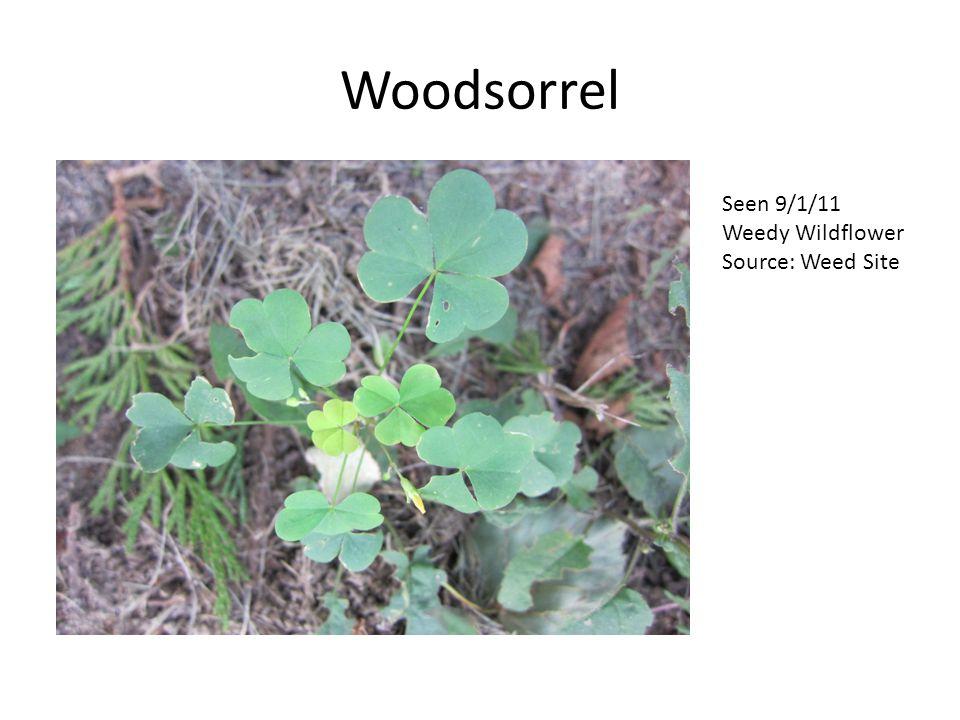 Woodsorrel Seen 9/1/11 Weedy Wildflower Source: Weed Site