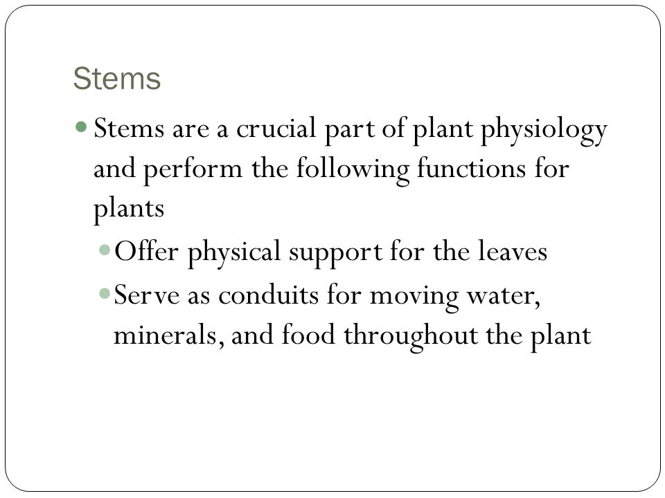 Stems Stems are a crucial part of plant physiology and perform the following functions for plants Offer physical support for the leaves Serve as condu