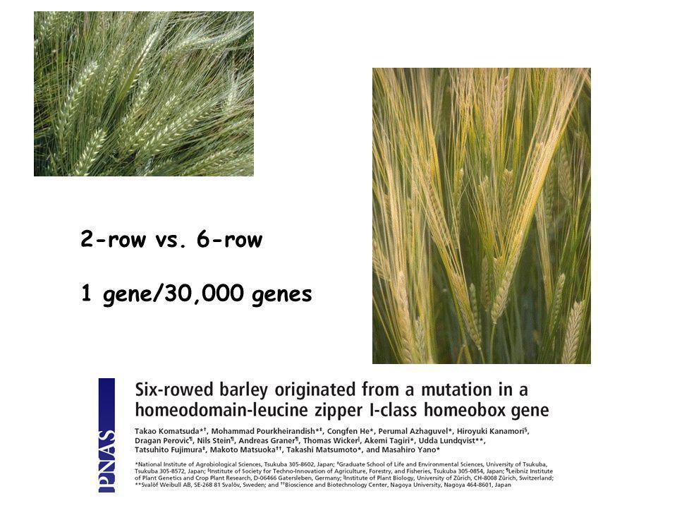 2-row vs. 6-row 1 gene/30,000 genes