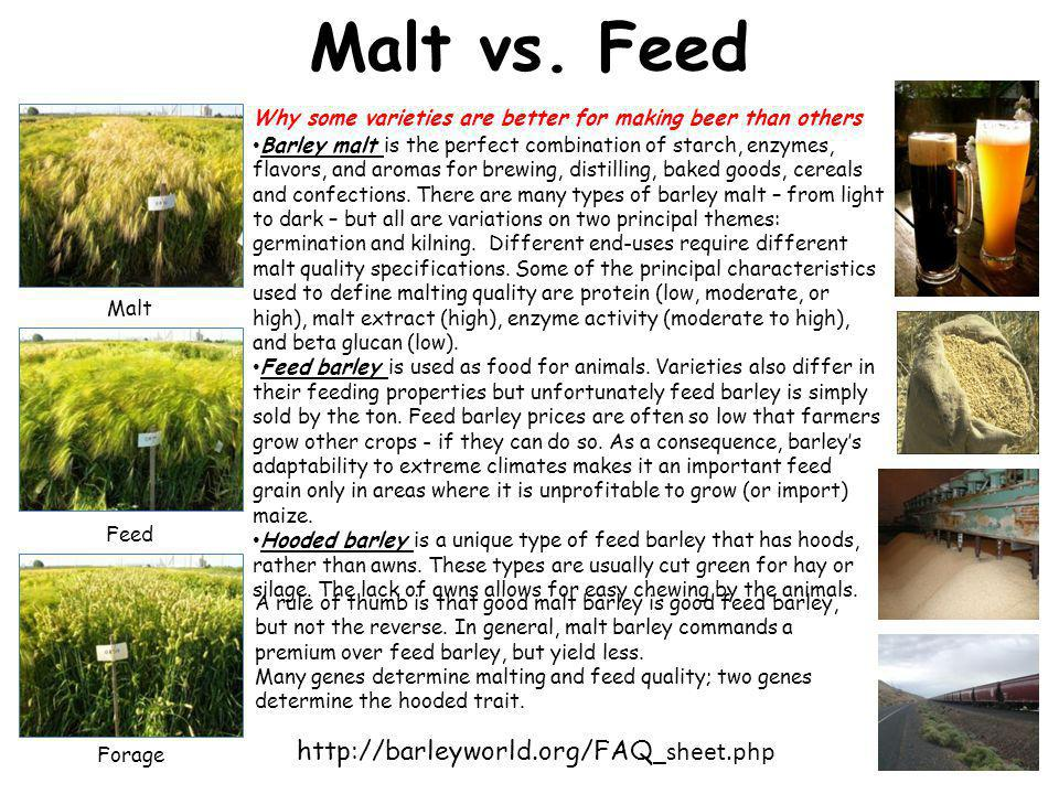 Malt vs.