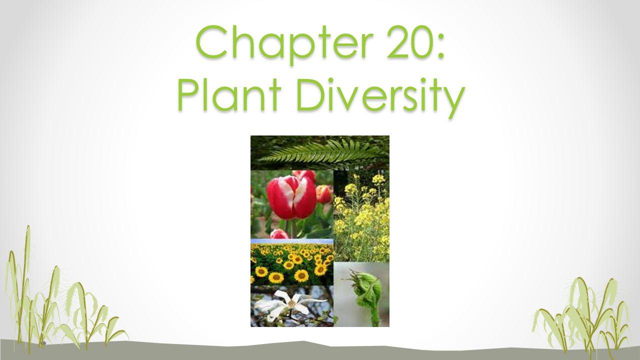 Chapter 20: Plant Diversity