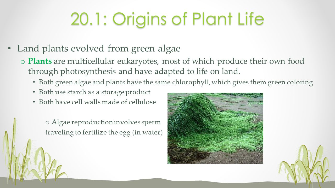 regeneration Plants can that can grow a new individual from a fragment of a stem, leaf, or root are reproducing by regeneration.