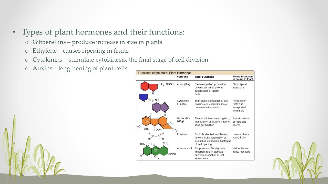 Types of plant hormones and their functions: o Gibberellins – produce increase in size in plants o Ethylene – causes ripening in fruits o Cytokinins –