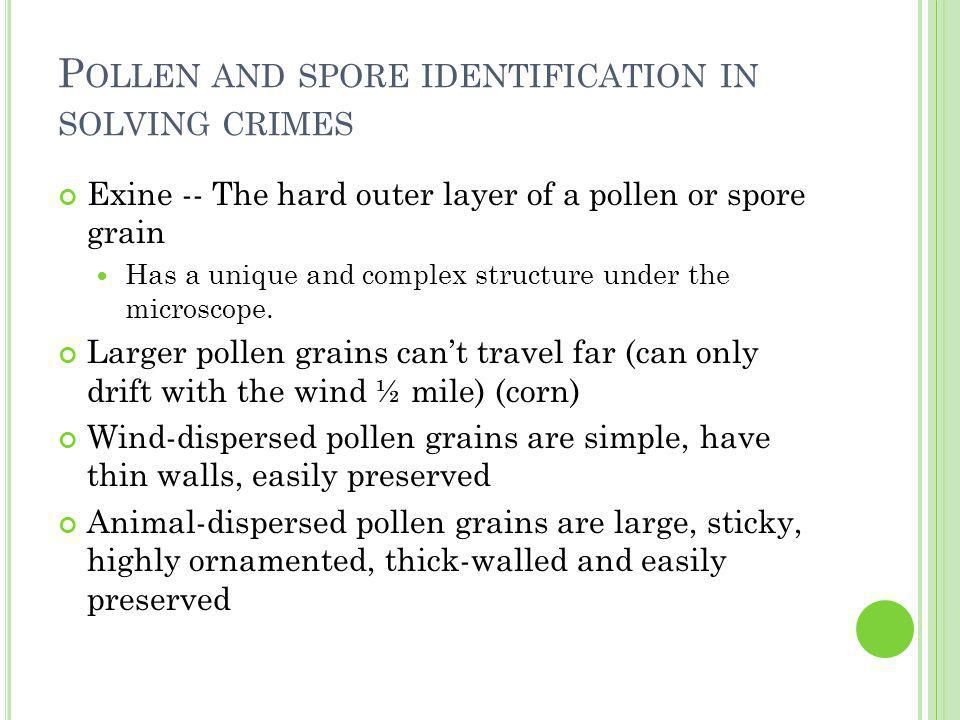 P OLLEN AND SPORE IDENTIFICATION IN SOLVING CRIMES Exine -- The hard outer layer of a pollen or spore grain Has a unique and complex structure under the microscope.