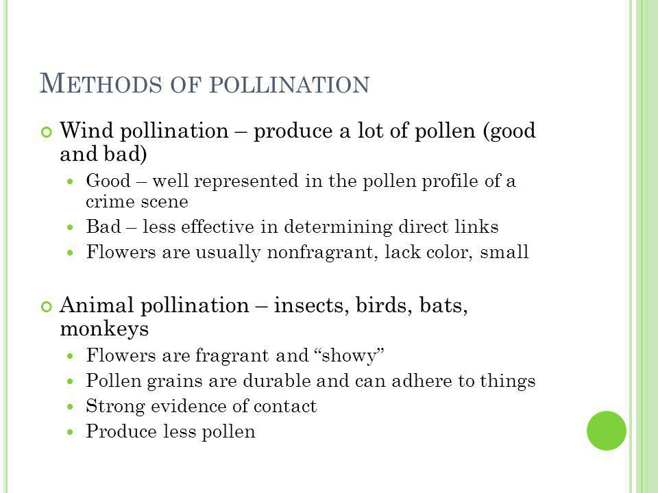 M ETHODS OF POLLINATION Wind pollination – produce a lot of pollen (good and bad) Good – well represented in the pollen profile of a crime scene Bad – less effective in determining direct links Flowers are usually nonfragrant, lack color, small Animal pollination – insects, birds, bats, monkeys Flowers are fragrant and showy Pollen grains are durable and can adhere to things Strong evidence of contact Produce less pollen