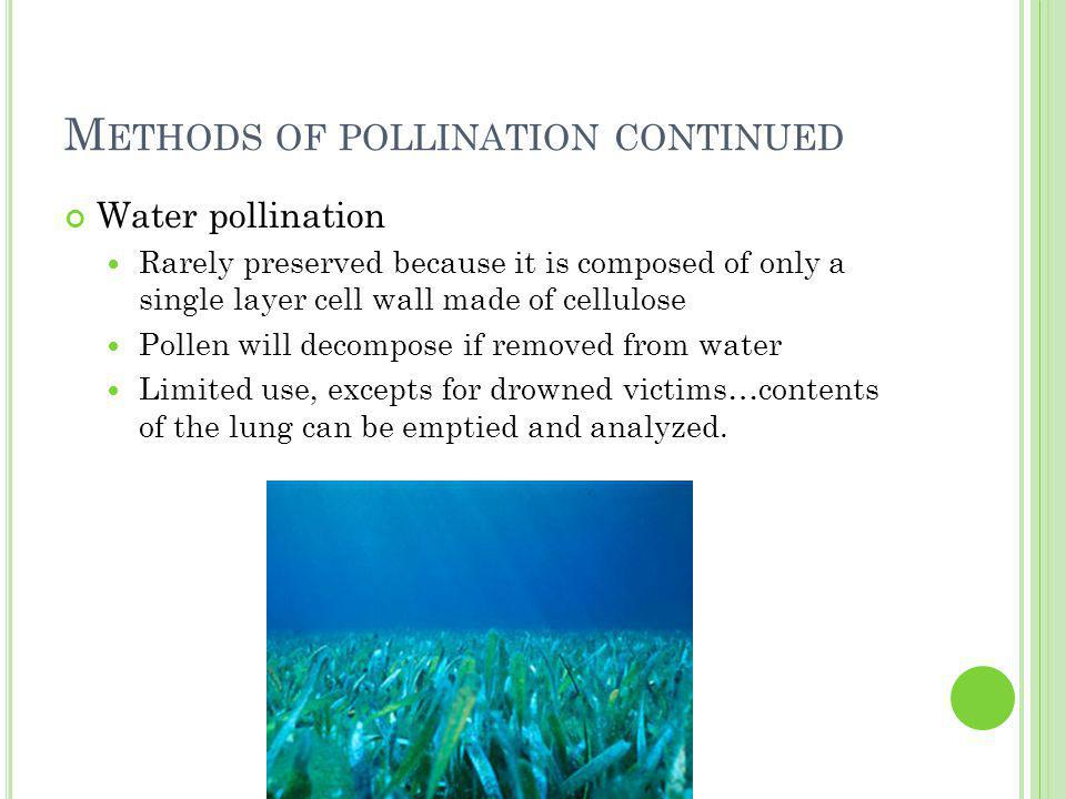 M ETHODS OF POLLINATION CONTINUED Water pollination Rarely preserved because it is composed of only a single layer cell wall made of cellulose Pollen will decompose if removed from water Limited use, excepts for drowned victims…contents of the lung can be emptied and analyzed.