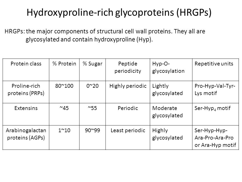 Hydroxyproline-rich glycoproteins (HRGPs) Protein class% Protein% SugarPeptide periodicity Hyp-O- glycosylation Repetitive units Proline-rich proteins (PRPs) 80~1000~20Highly periodicLightly glycosylated Pro-Hyp-Val-Tyr- Lys motif Extensins~45~55PeriodicModerate glycosylated Ser-Hyp 4 motif Arabinogalactan proteins (AGPs) 1~1090~99Least periodicHighly glycosylated Ser-Hyp-Hyp- Ara-Pro-Ara-Pro or Ara-Hyp motif HRGPs: the major components of structural cell wall proteins.