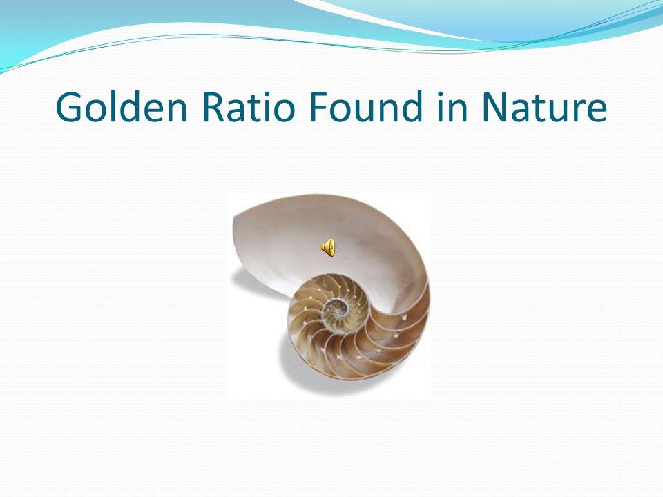 Golden Ratio Found in Nature
