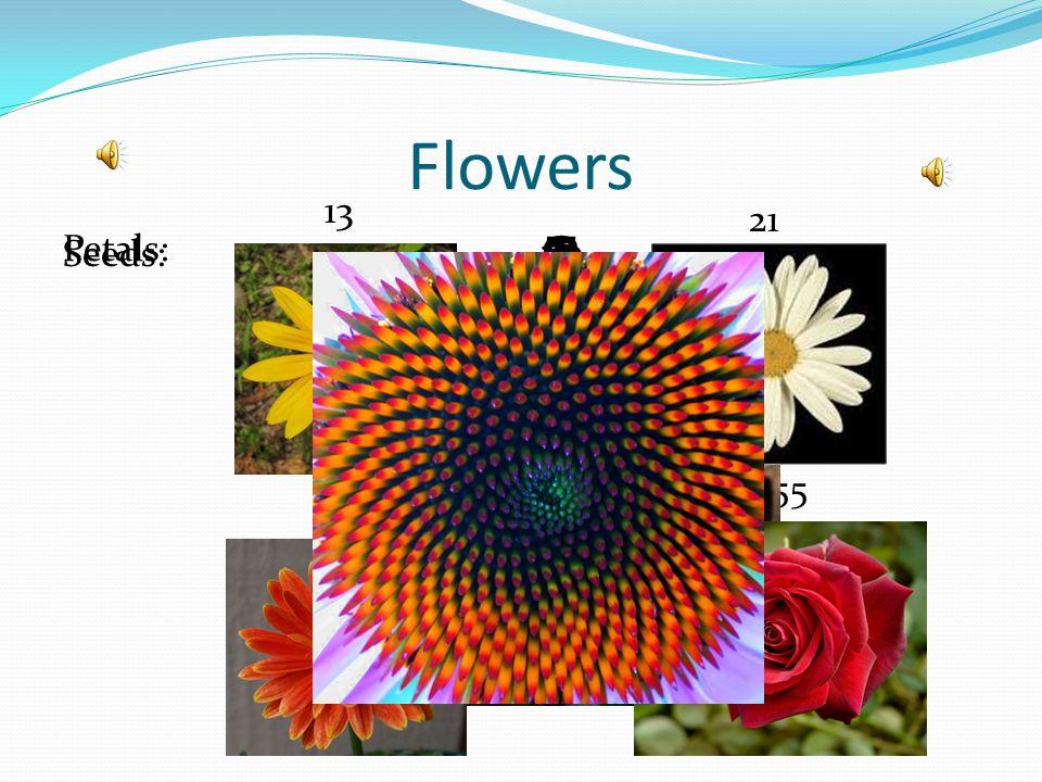 Flowers Petals: Seeds: 3 1 55 2 8 5 13 34 21