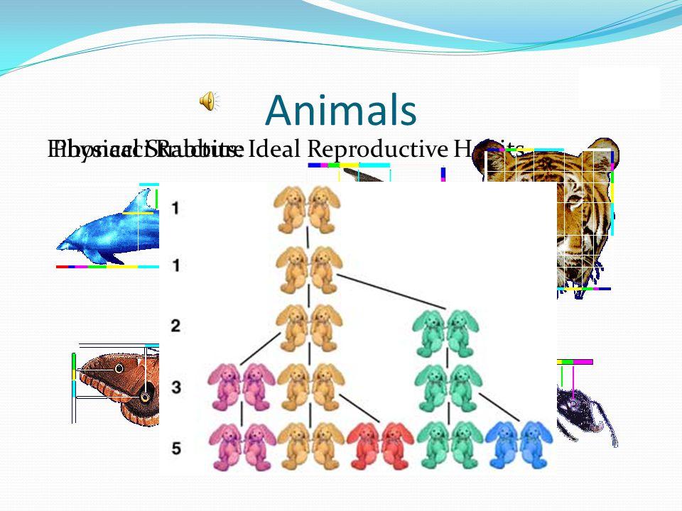 Animals Fibonacci Rabbits: Ideal Reproductive HabitsPhysical Structure