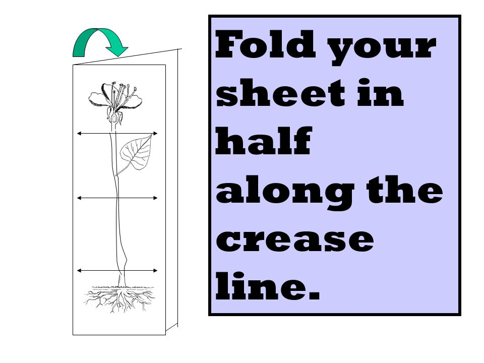 Fold your sheet in half along the crease line.