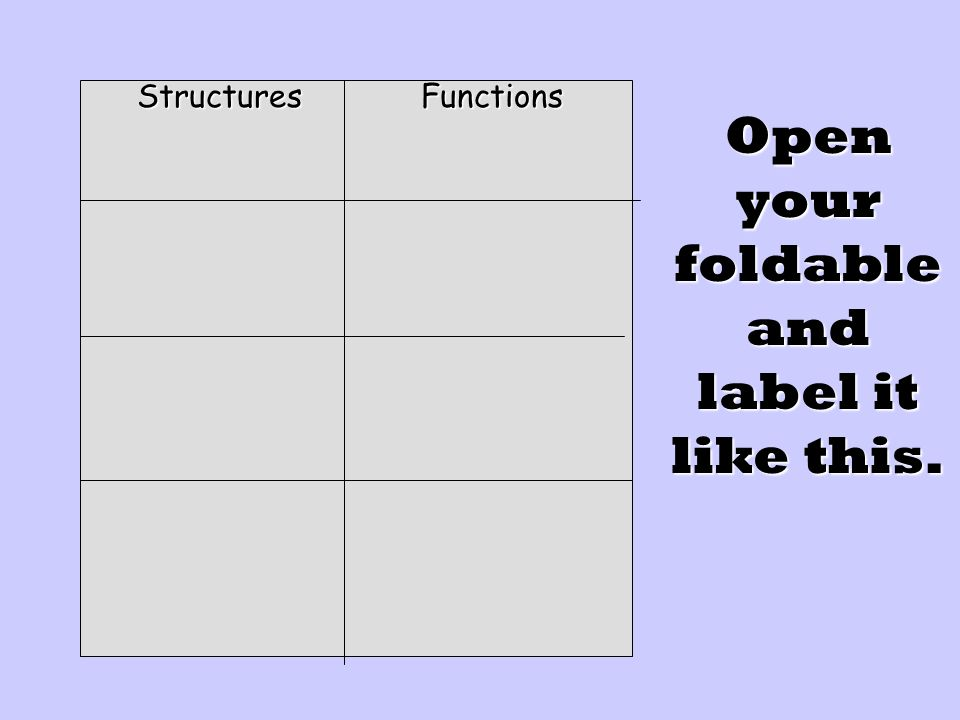 Fill in your foldable with the notes provided.
