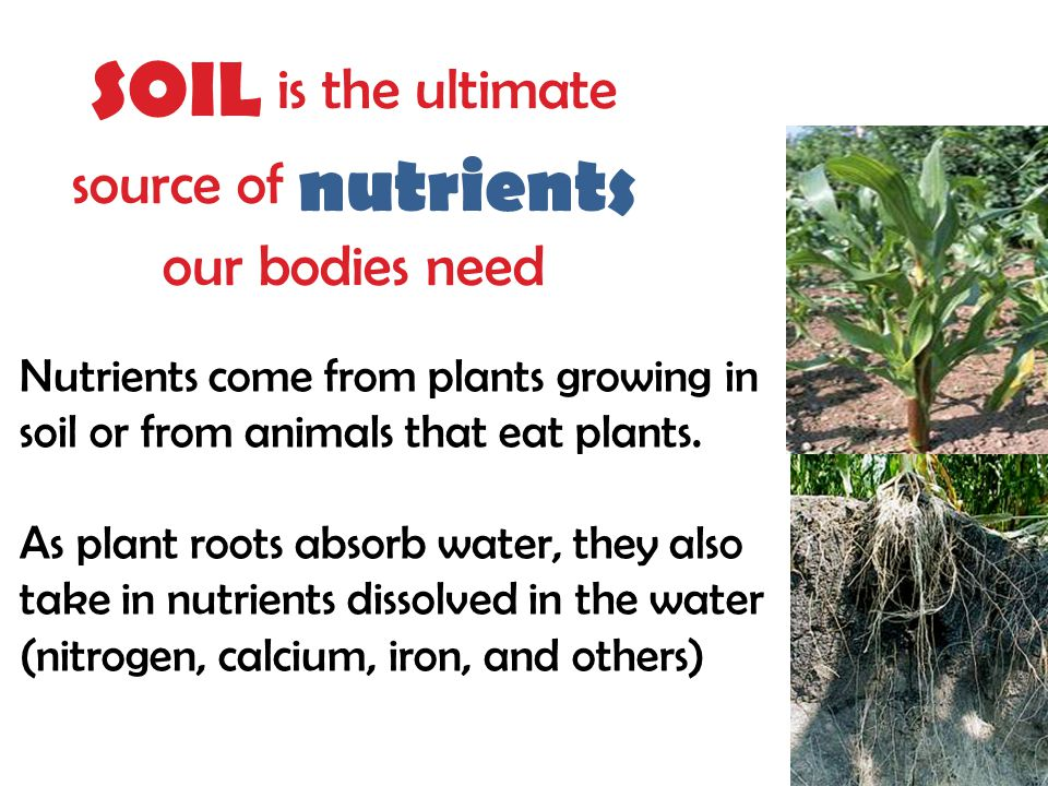 SOIL is the ultimate source of nutrients our bodies need Nutrients come from plants growing in soil or from animals that eat plants.