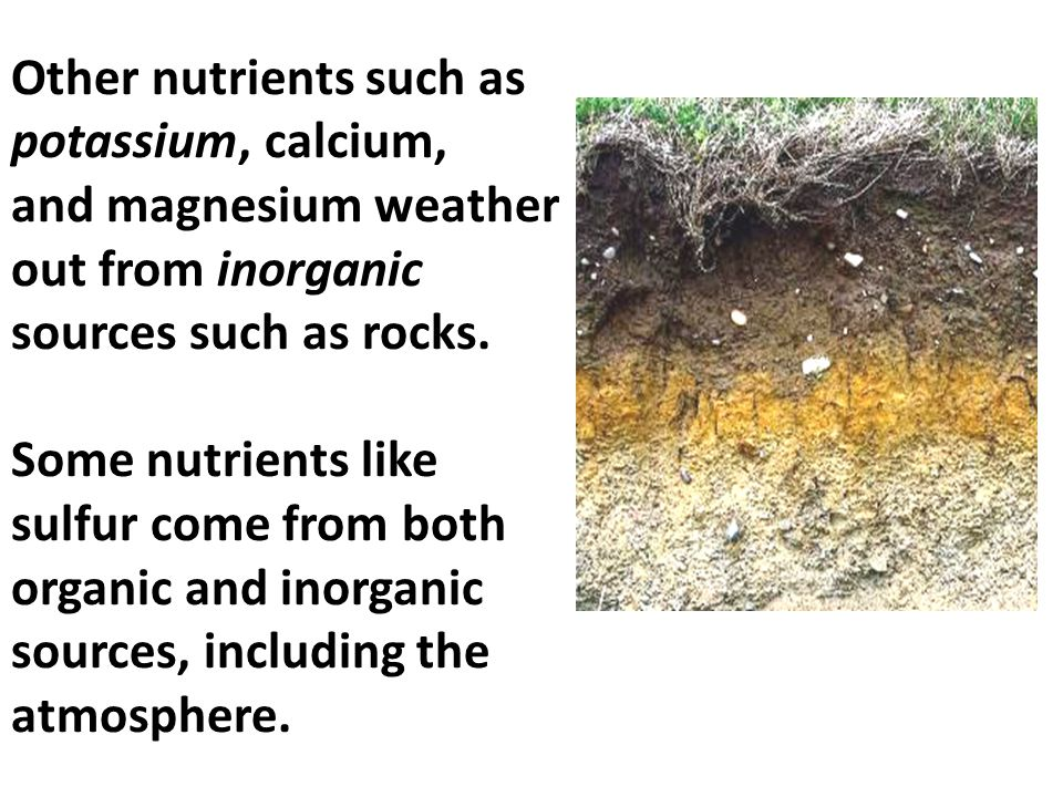 Other nutrients such as potassium, calcium, and magnesium weather out from inorganic sources such as rocks. Some nutrients like sulfur come from both