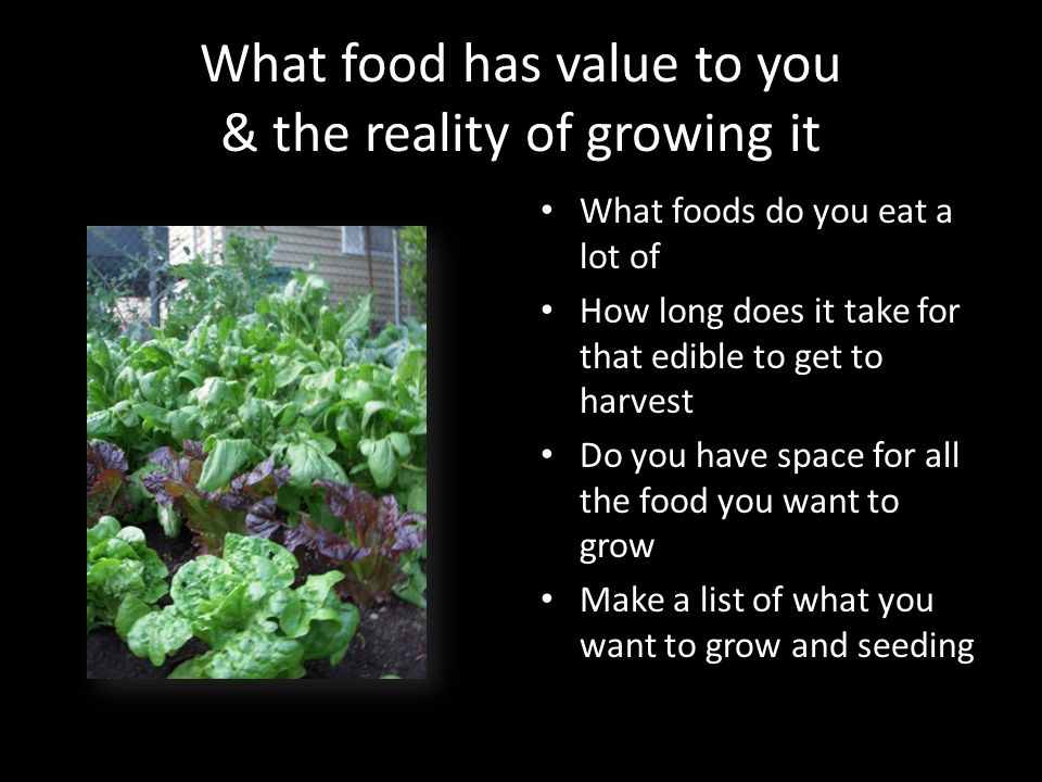 What food has value to you & the reality of growing it What foods do you eat a lot of How long does it take for that edible to get to harvest Do you h