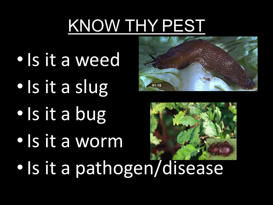 Is it a weed Is it a slug Is it a bug Is it a worm Is it a pathogen/disease KNOW THY PEST