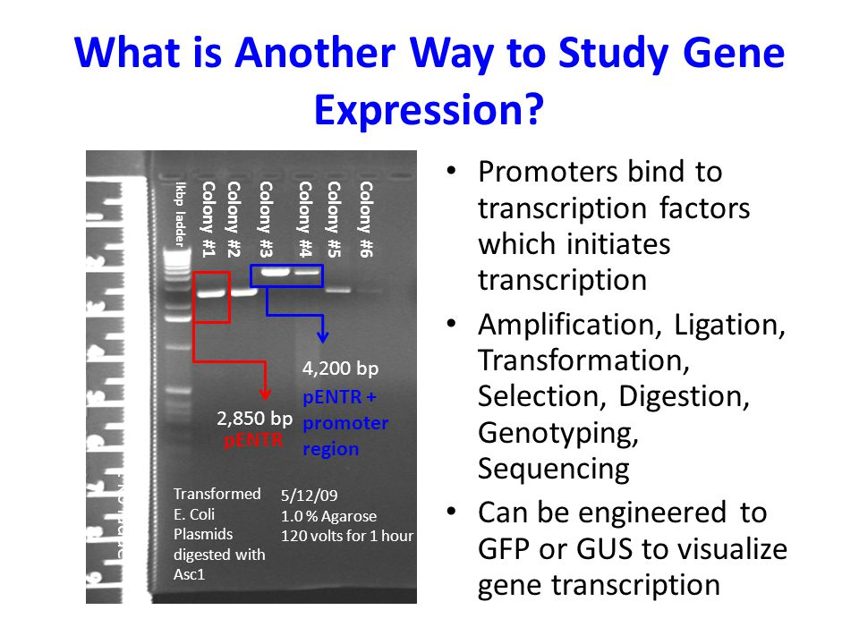 What is Another Way to Study Gene Expression.