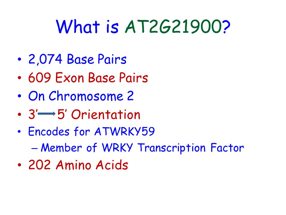 What is AT2G21900? 2,074 Base Pairs 609 Exon Base Pairs On Chromosome 2 3 5 Orientation Encodes for ATWRKY59 – Member of WRKY Transcription Factor 202