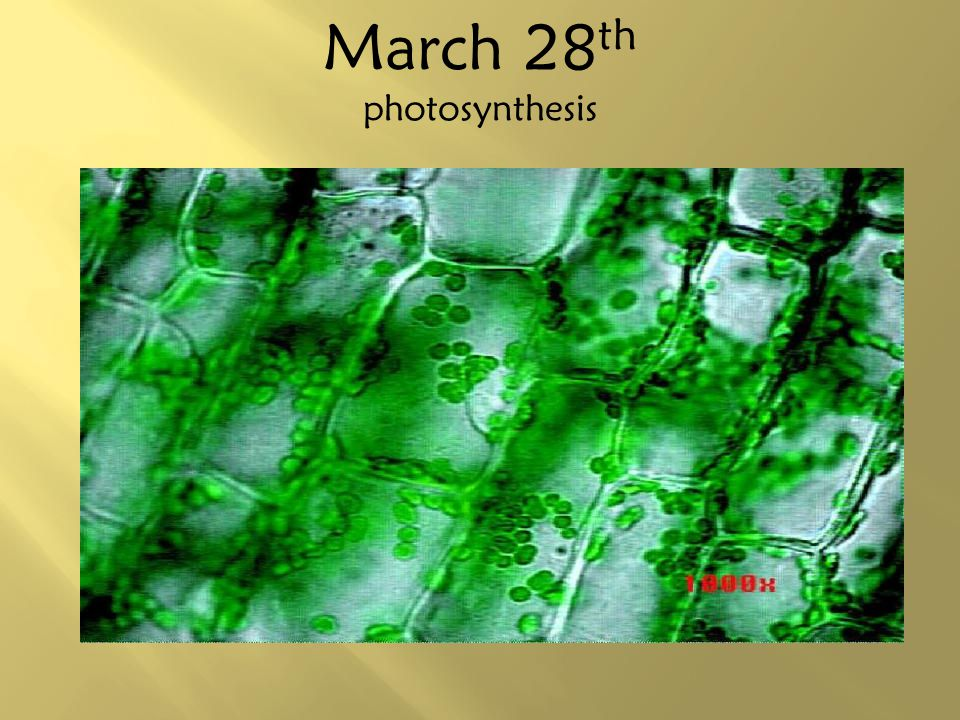 March 28 th photosynthesis
