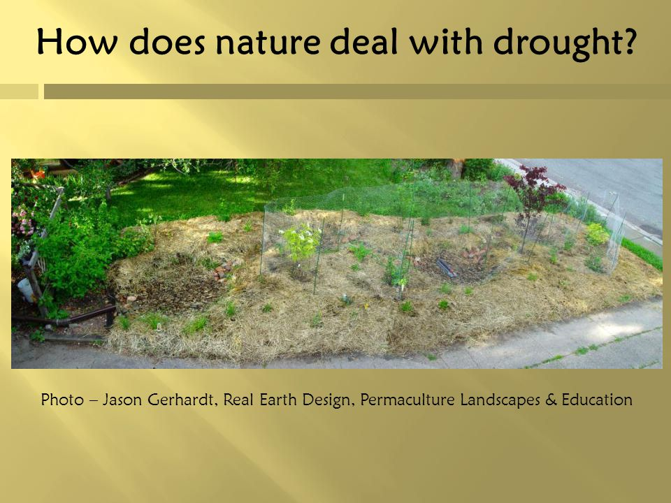 How does nature deal with drought? Photo – Jason Gerhardt, Real Earth Design, Permaculture Landscapes & Education