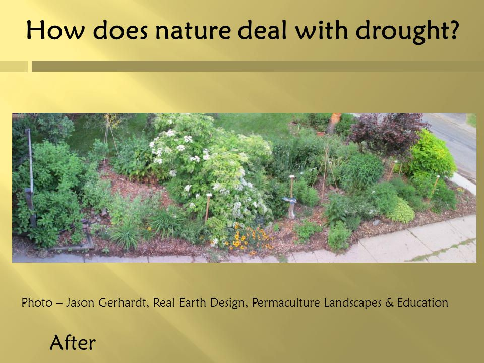 How does nature deal with drought? After Photo – Jason Gerhardt, Real Earth Design, Permaculture Landscapes & Education