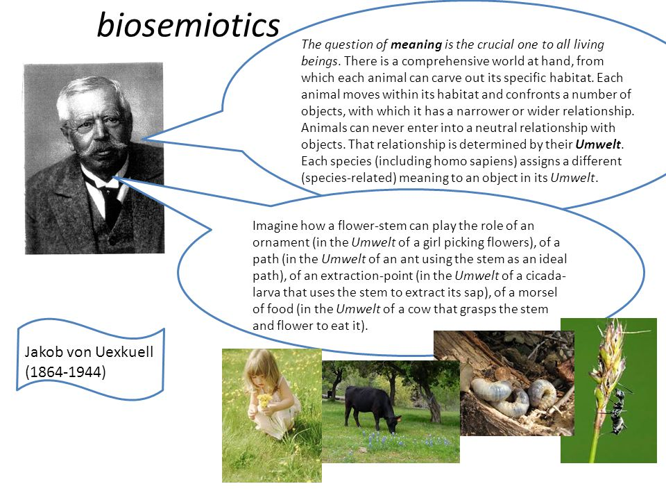 biosemiotics Jakob von Uexkuell (1864-1944) The question of meaning is the crucial one to all living beings. There is a comprehensive world at hand, f