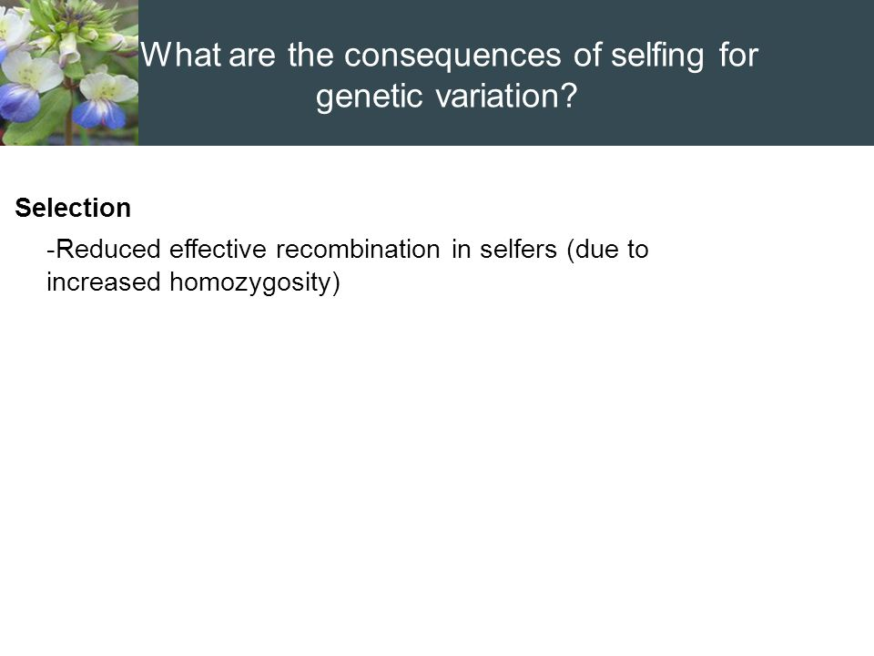 Selection -Reduced effective recombination in selfers (due to increased homozygosity) What are the consequences of selfing for genetic variation?