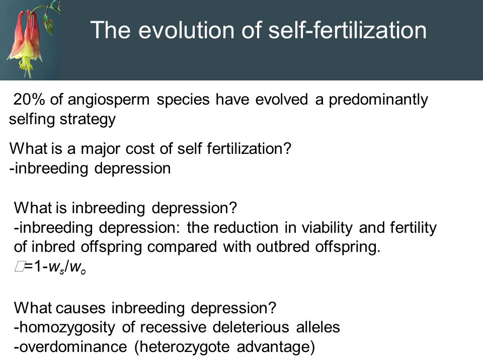 The evolution of self-fertilization 20% of angiosperm species have evolved a predominantly selfing strategy What is a major cost of self fertilization