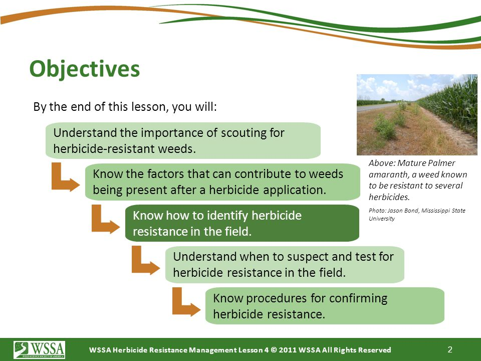 WSSA Herbicide Resistance Management Lesson 4 © 2011 WSSA All Rights Reserved Lesson 4 1 The copyright in these Weed Science Society of America (WSSA)