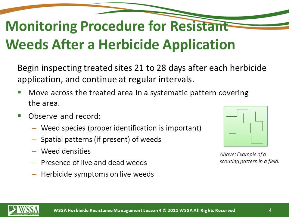 WSSA Herbicide Resistance Management Lesson 4 © 2011 WSSA All Rights Reserved The Importance of Monitoring Many factors can contribute to the presence