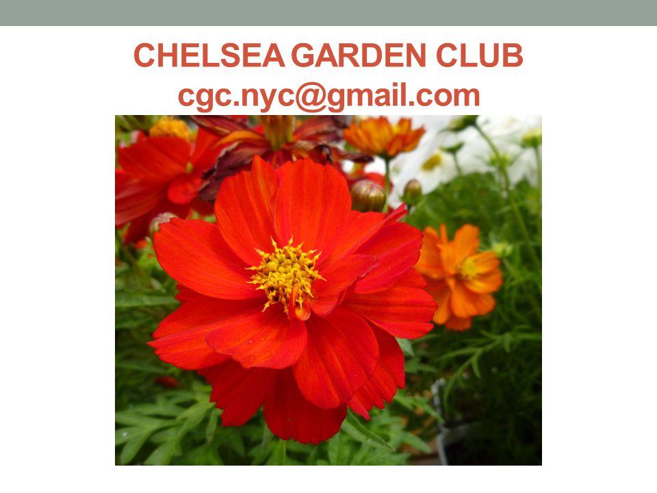 CHELSEA GARDEN CLUB cgc.nyc@gmail.com