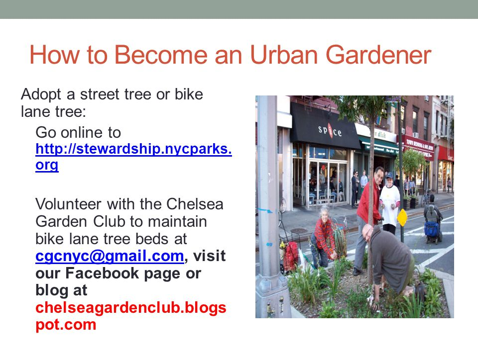How to Become an Urban Gardener Adopt a street tree or bike lane tree: Go online to http://stewardship.nycparks.
