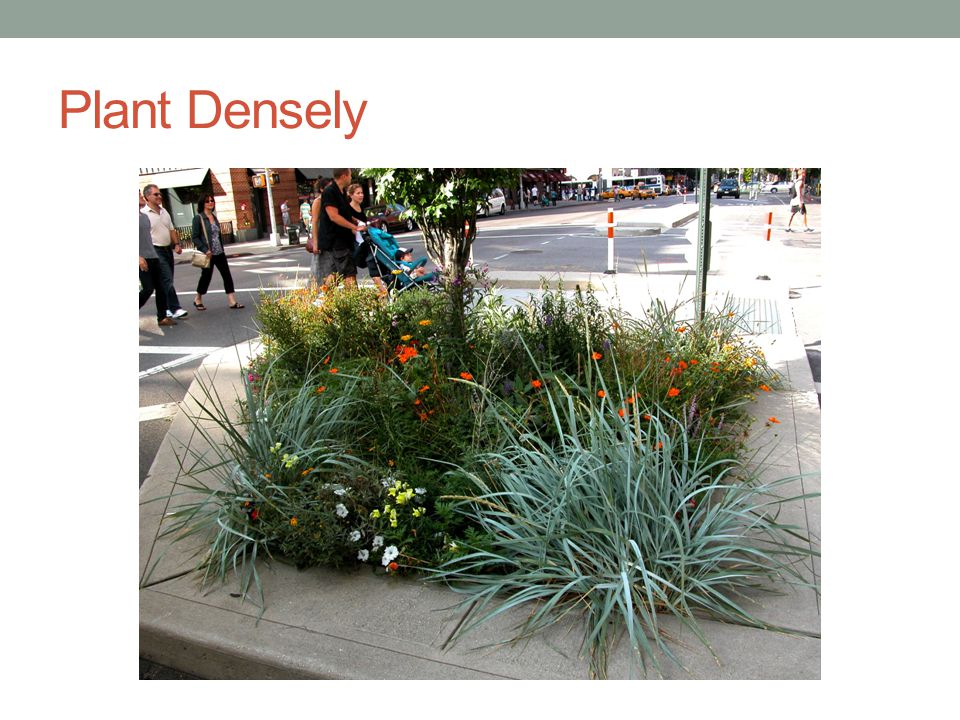 Plant Densely