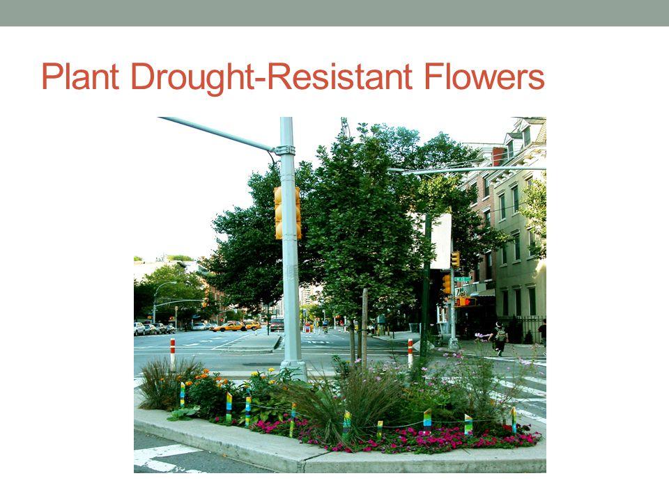 Plant Drought-Resistant Flowers