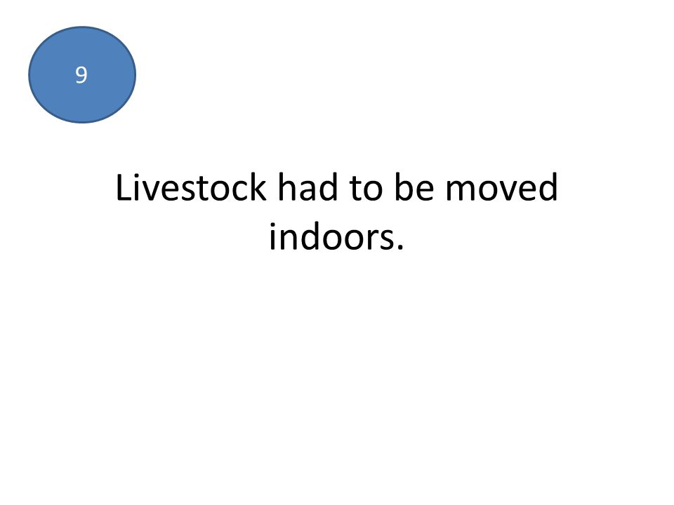 Livestock had to be moved indoors. 9