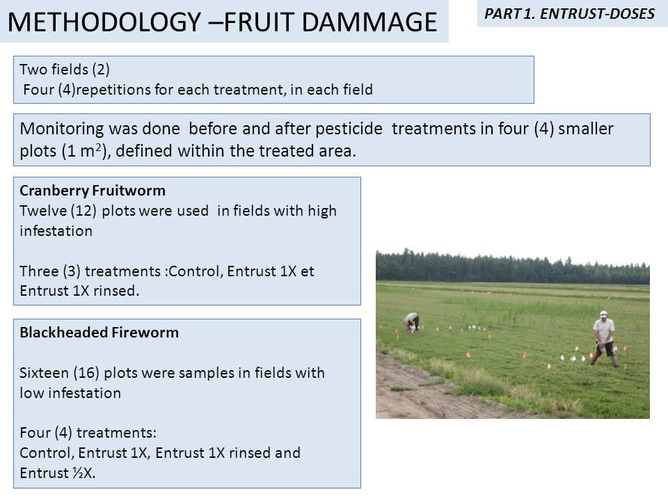 Two fields (2) Four (4)repetitions for each treatment, in each field Cranberry Fruitworm Twelve (12) plots were used in fields with high infestation Three (3) treatments :Control, Entrust 1X et Entrust 1X rinsed.