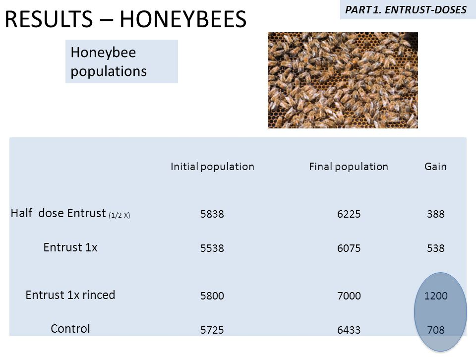 Initial populationFinal populationGain Half dose Entrust (1/2 X) 58386225388 Entrust 1x 55386075538 Entrust 1x rinced 580070001200 Control 57256433708 Honeybee populations RESULTS – HONEYBEES PART 1.