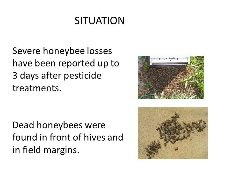 Blackheaded Fireworm: On 100 stems per plot Count small larvae or eggs.