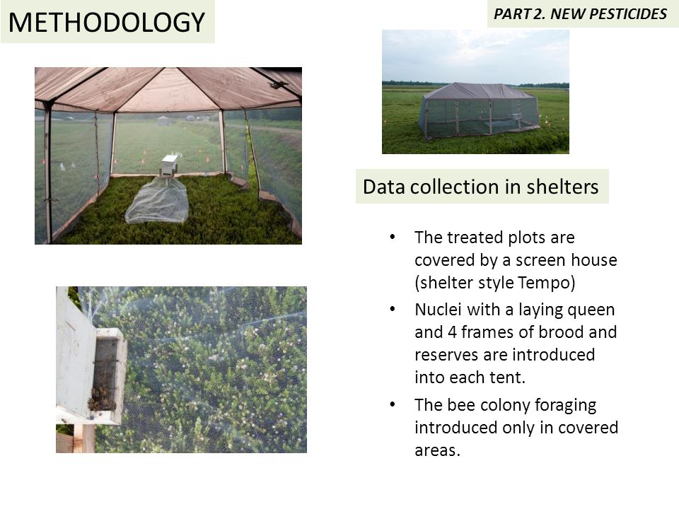 Data collection in shelters The treated plots are covered by a screen house (shelter style Tempo) Nuclei with a laying queen and 4 frames of brood and reserves are introduced into each tent.